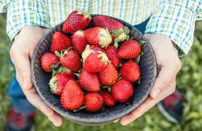 Richmond Nursery Berry Farm